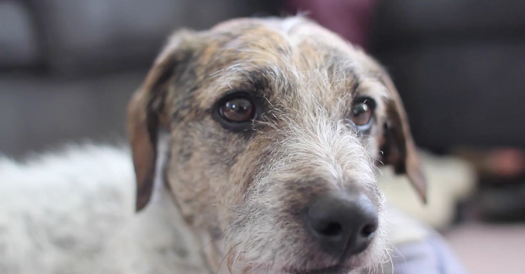 ASPCA Day Curated Footage Collections | Shutterstock