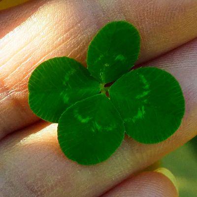 Ana Herbalist