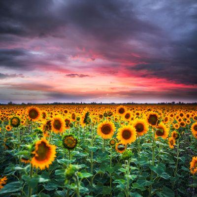 Oksana Shufrych