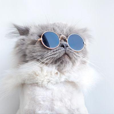 funny cat posing sunglasses stock photo edit now 1123229663