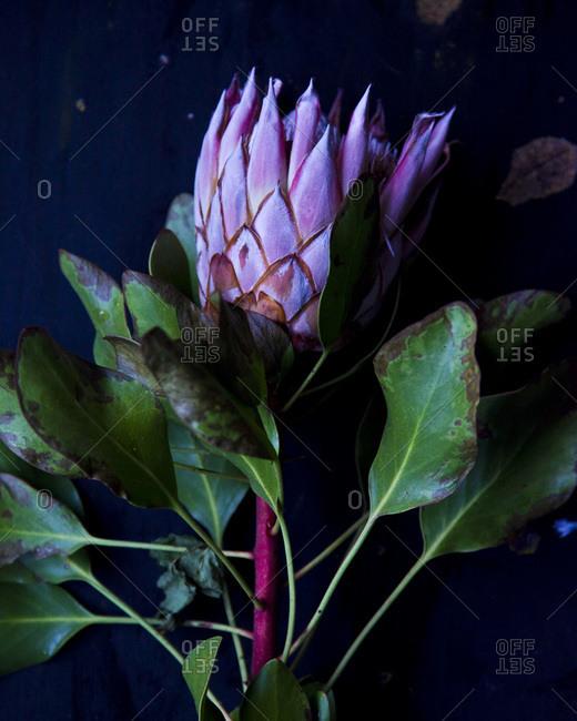 Still life with beautiful purple flower