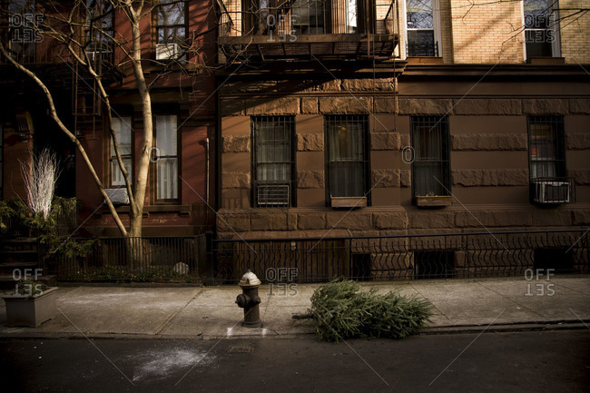 Lone Christmas tree thrown out on curb in front of Brooklyn brownstones