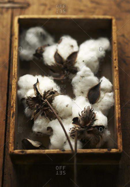 Wood box filled with natural cotton on branches