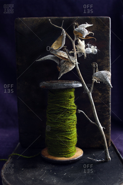 Green yarn on wood/metal spool with milkweed pod/branch leaning on it on purple velvet