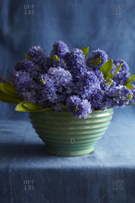 Blue hyacinths in a ribbed green bowl on blue fabric