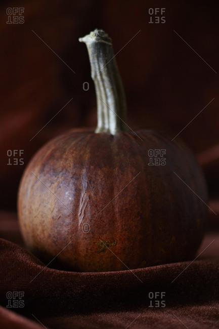 Pumpkin sitting on pumpkin colored velvet cloth