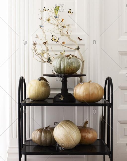 Pumpkins on a counter
