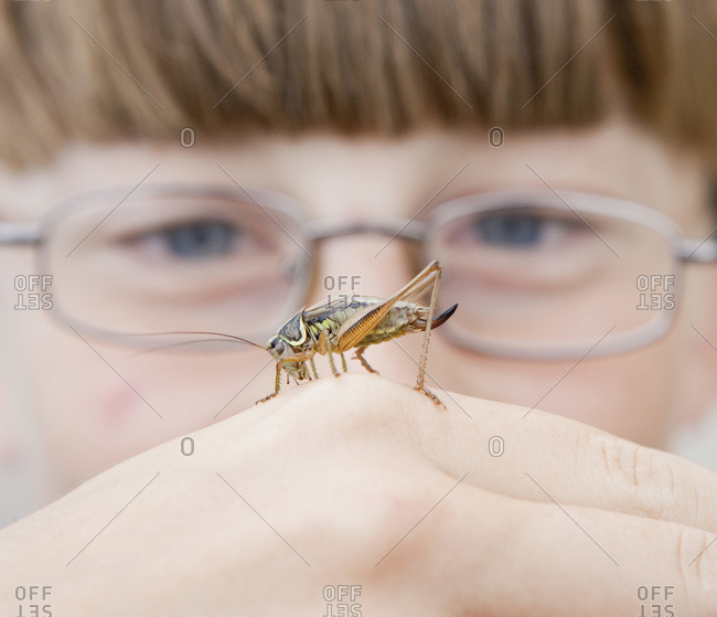 A cricket on the hand of a boy