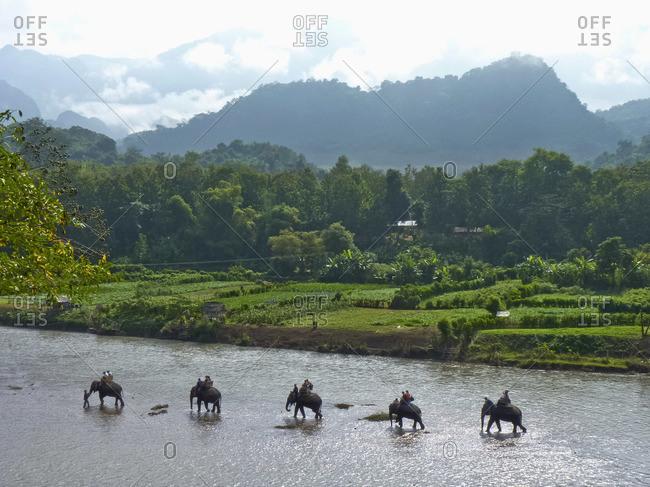 An elephant camp walking in the Mekong River, Luang Prabang, Laos