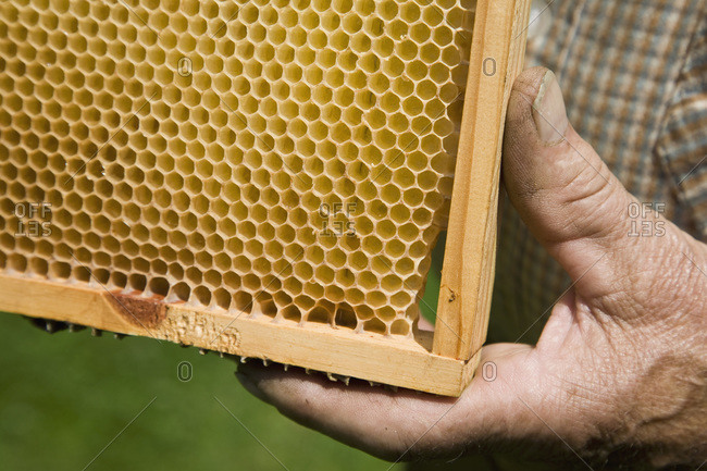 A man holding a honeycomb tray