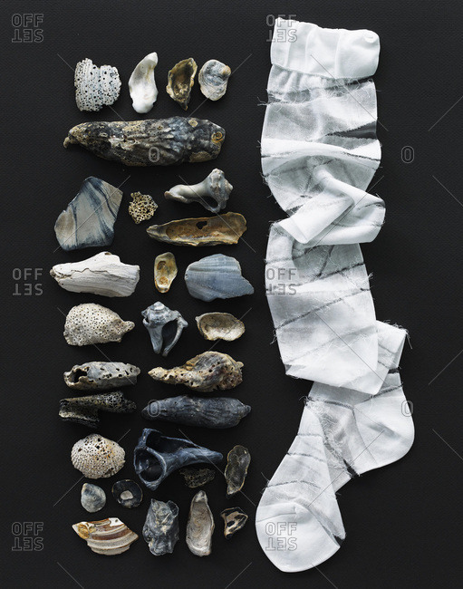Arranged shells from above
