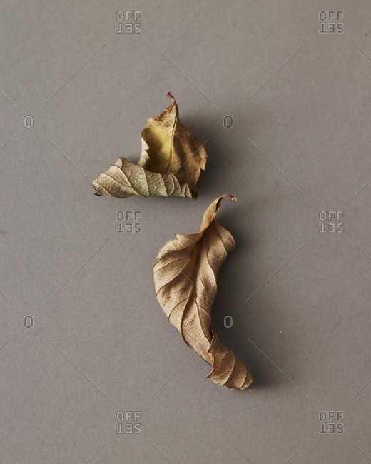 Two small leaves on a counter