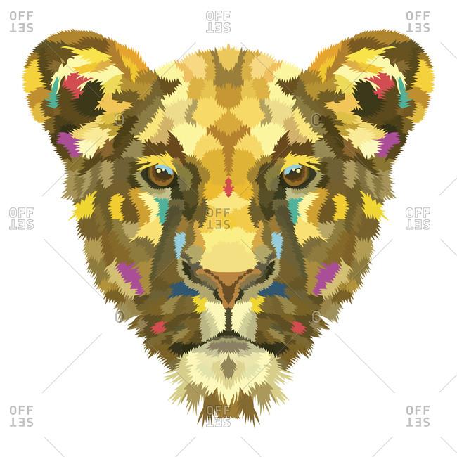 Calm lioness