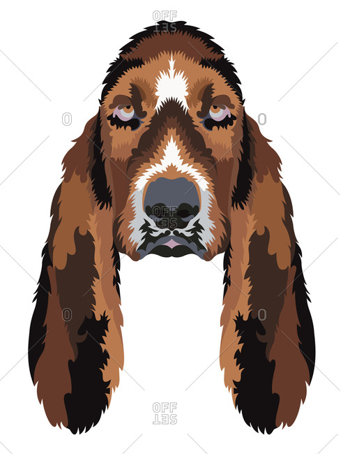 Hound dog portrait