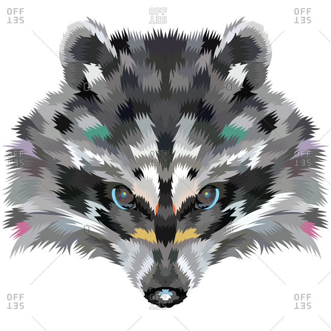 A raccoon portrait