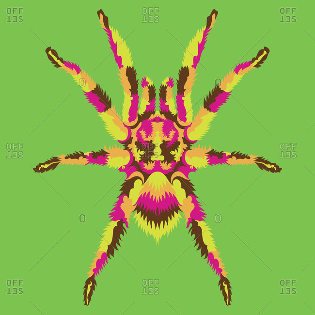 A colorful tarantula spider