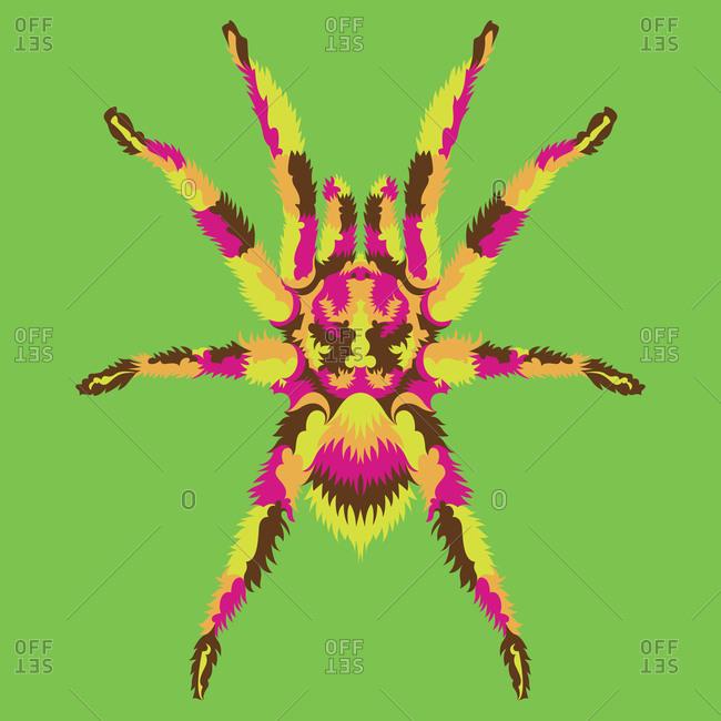 A colorful tarantula spider