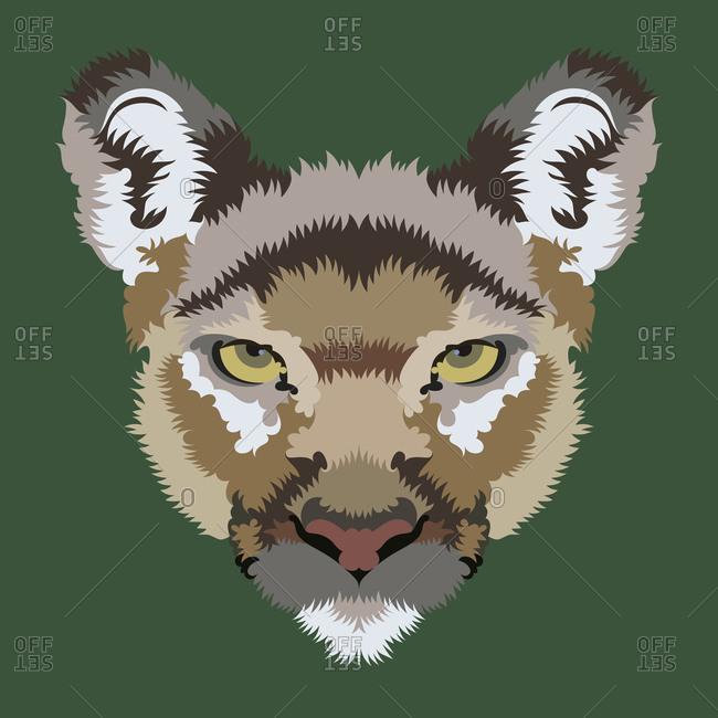 A portrait of a Cougar