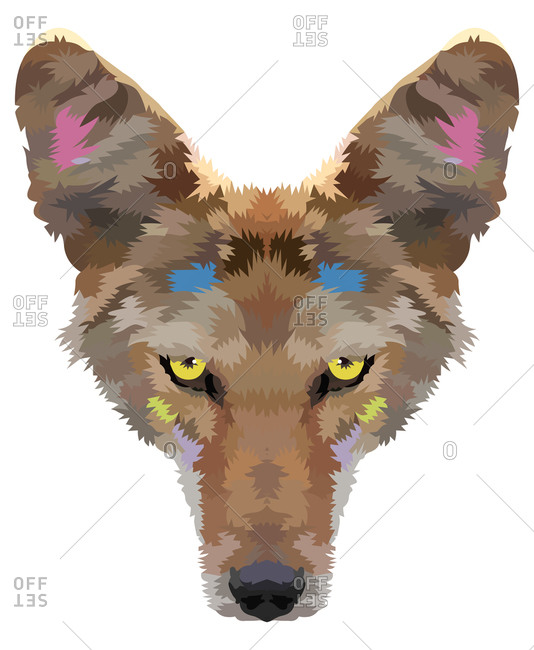 A coyote head