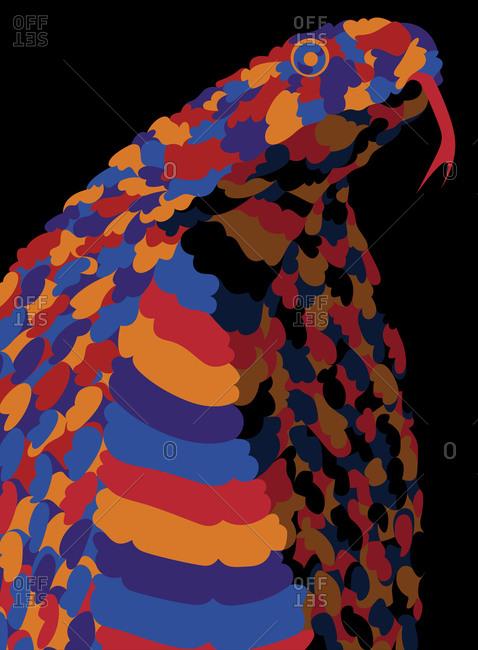 A colorful cobra portrait