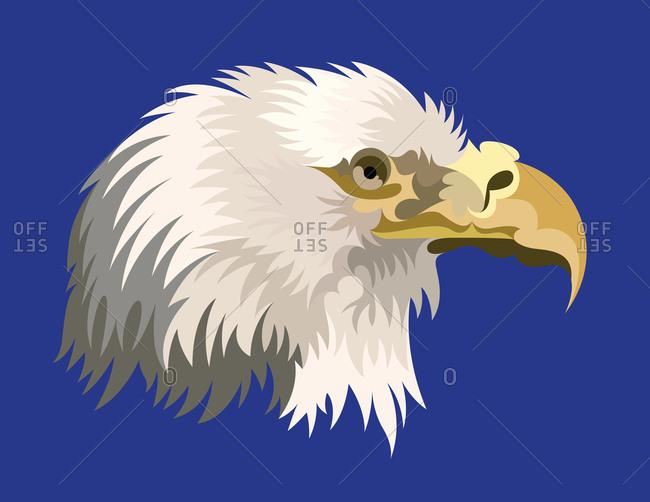 A war eagle portrait