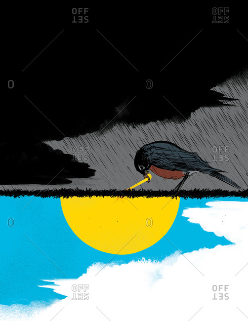 A bird standing on the ground in the storm