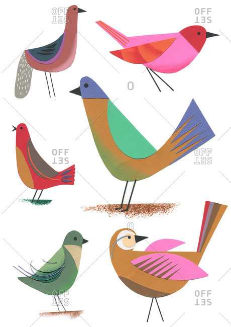 Collection of different songbirds