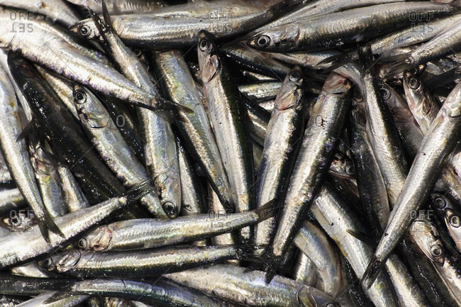 Raw fish on display in market
