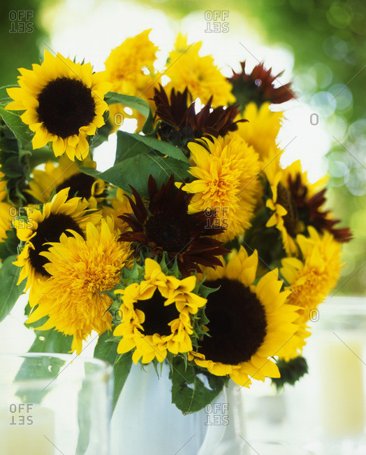 Arranged sunflowers in a vase.