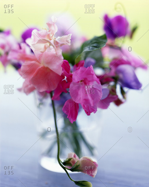 Bunch of pink flowers in a vase.