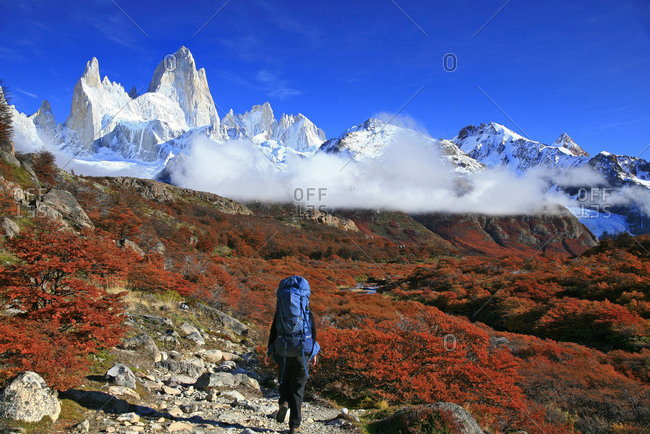 Backpacker in autumn Nire shrubs in Los Glaciares National Park, Patagonia, Argentina