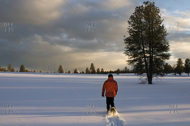 A young woman snowshoes through freshly fallen snow at sunset in Flagstaff, Arizona