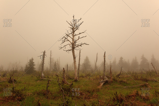 Fog and dead trees in remote area