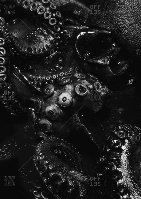 Close up of black octopus