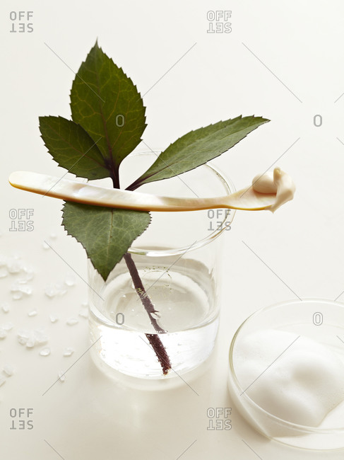Rose leaves in water and skincare fluids.
