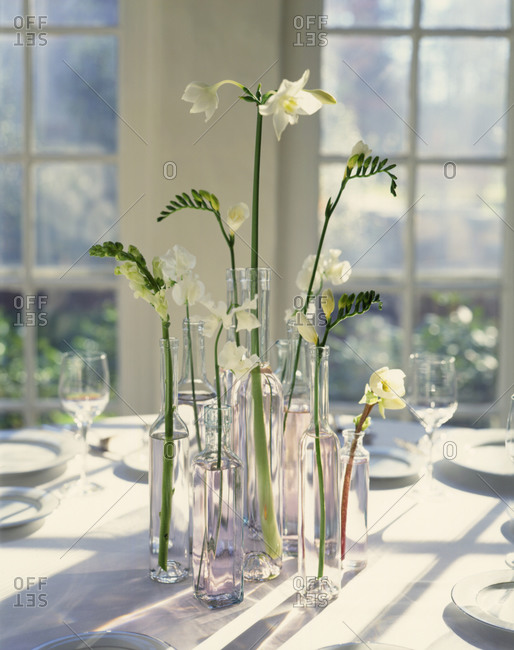 White flowers in glass vases in a sunny room