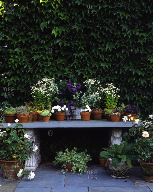 Different kind of flowerpots with plants on an old stone bench