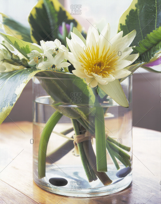 Bunch of white flowers in a vase.