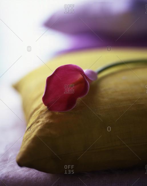 A single calla lying on a pillow.
