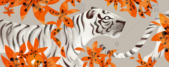 White tiger and orange flowers