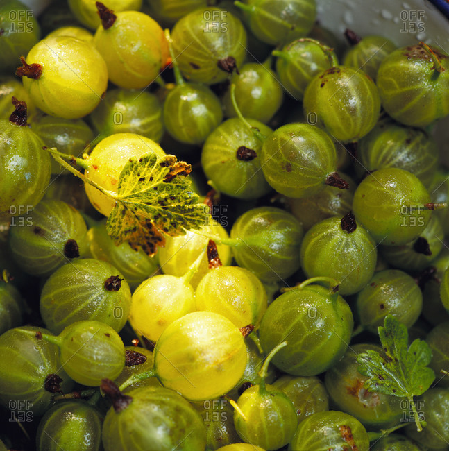 Gooseberries photographed from above