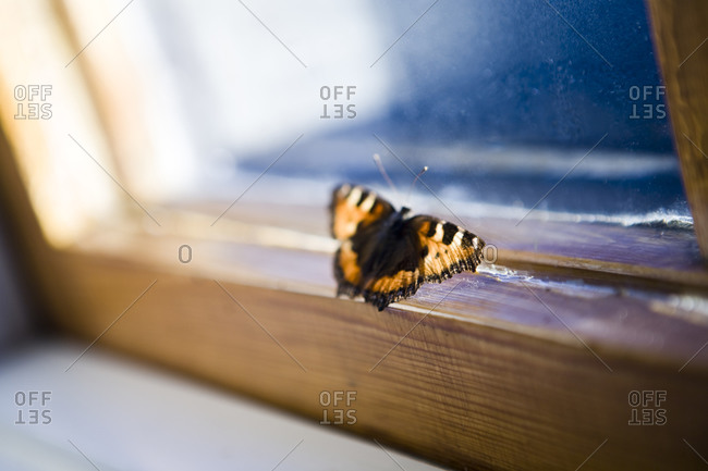 Butterfly trying to get out, Sweden