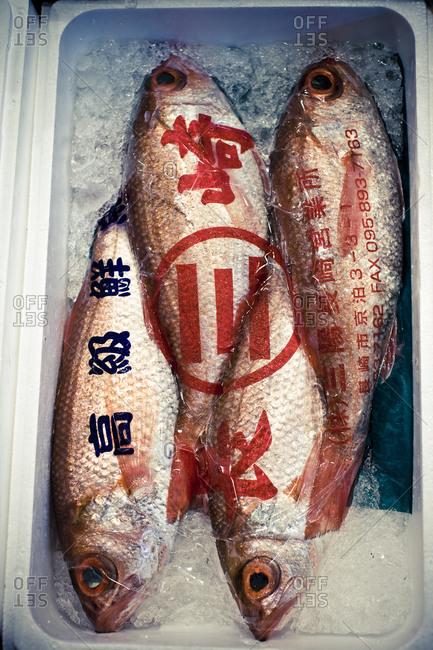 A fish market, close-up, Japan