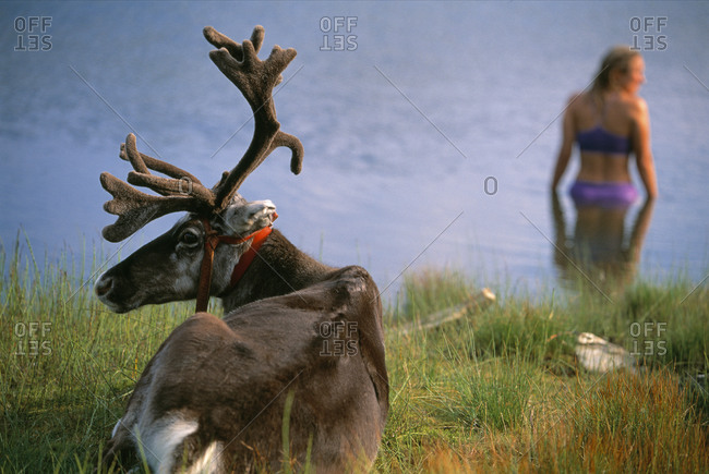 Woman on a reindeer trekking trip with Sami tour operator