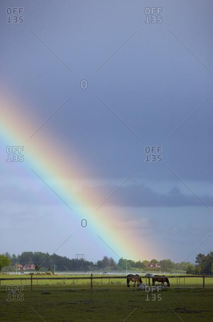 Horses under the rainbow, Sweden