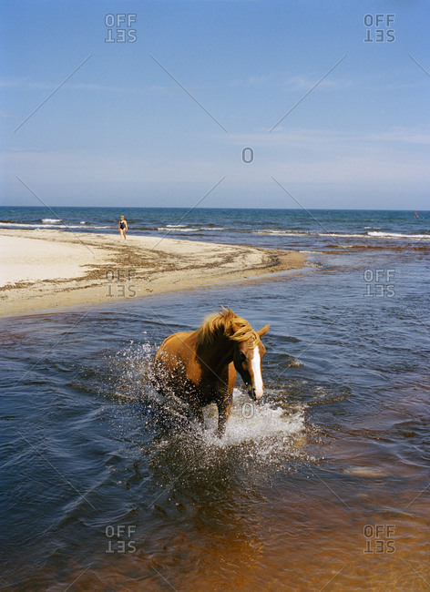 Horse bathing in the sea, Sweden