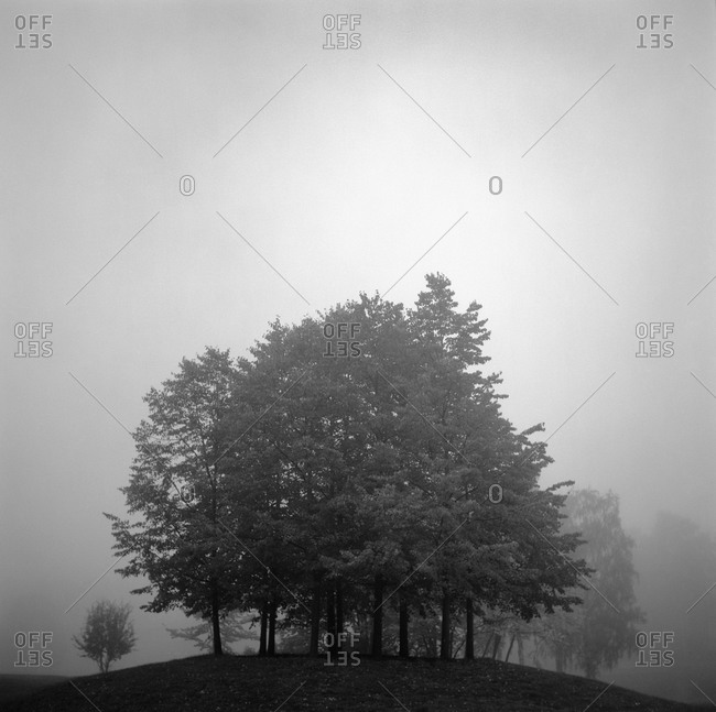 A clump of trees shrouded in fog, Sweden