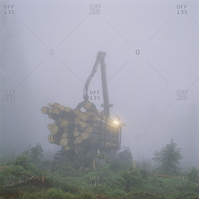 Mobile crane lifting logs at dawn