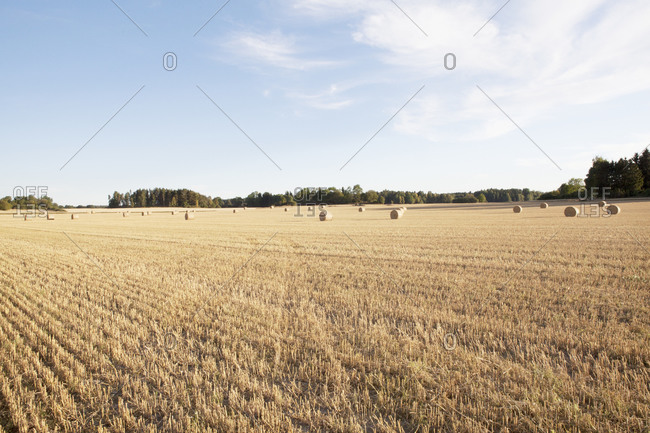 Hay bales in field agriculture