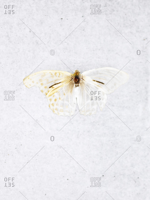 Butterfly on white background butterfly